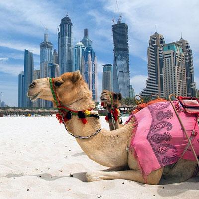 emirates tour