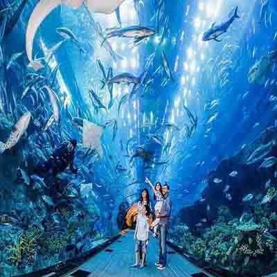 Dolphin Lagoon Show
