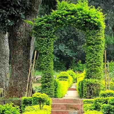 rose-garden-yercaud-visiit