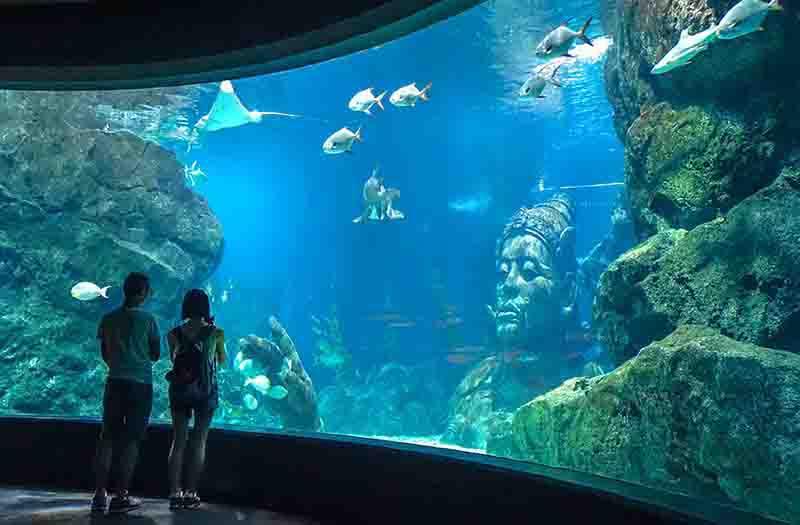 siam-ocean-world-bangkok-visiit