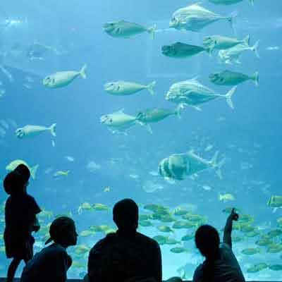 sea-aquarium-singapore-visiit