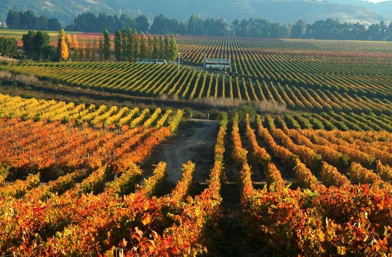 Colchagua Wine Valley